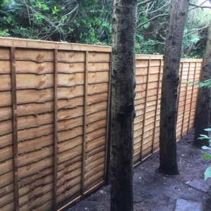 fence-with-trees